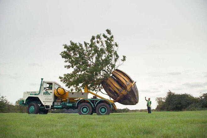 Monocot, Fibrous Root, Tree Transportation, சல்லிவேர்கள் ஆணிவேர்கள்